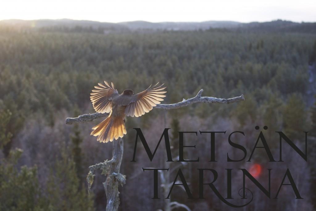 kuukkeli_metsantarina
